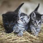 猫目はかわいい!猫目の特徴と猫目にするためのメイク術