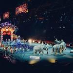 世界三大サーカスとは?それぞれのサーカスの演目と魅力も!