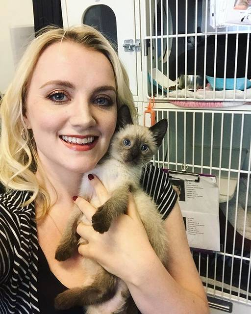 "Evanna Lynch on Instagram: ""Had the cutest morning ever at the @straycatalliance shelter today! They were the sweetest cats ever, so friendly and playful, and all in…"" (704199)"
