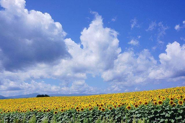"Photograph Japan 365's Instagram profile post: ""#ぜるぶの丘[Zerubu Hill]⠀ MAP:https://goo.gl/maps/SSyfERGmxp194nCs7⠀ ⠀ #awesomeearth #picoftheday #landscape #Japan #travel #sightseeing…"" (865290)"