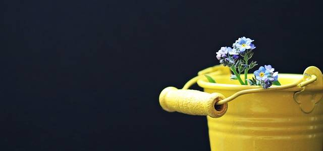 Bucket Forget Me Not Flower · Free photo on Pixabay (31710)