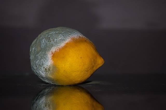 Lemon Rotten Fruit · Free photo on Pixabay (69697)