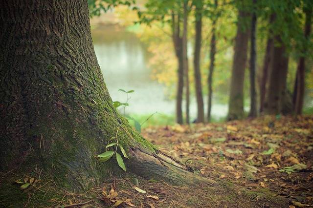 Tree Trunk Forest Floor · Free photo on Pixabay (70215)