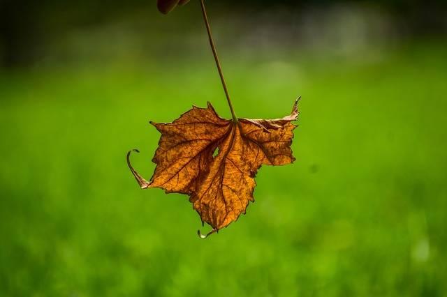 Dry Leaf End Yellow · Free photo on Pixabay (73922)