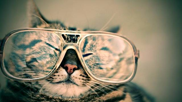 Cat Glasses Eyewear - Free photo on Pixabay (78369)