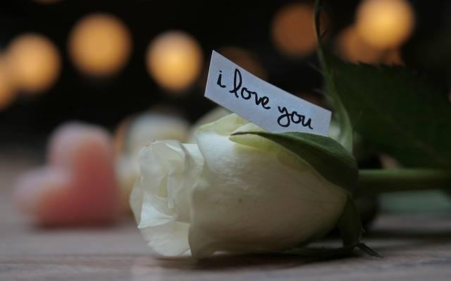 Rose Bokeh Heart Love - Free photo on Pixabay (78555)