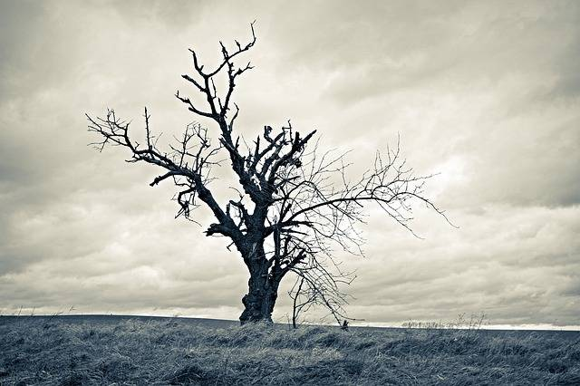 Tree Dried Lonely - Free photo on Pixabay (83006)