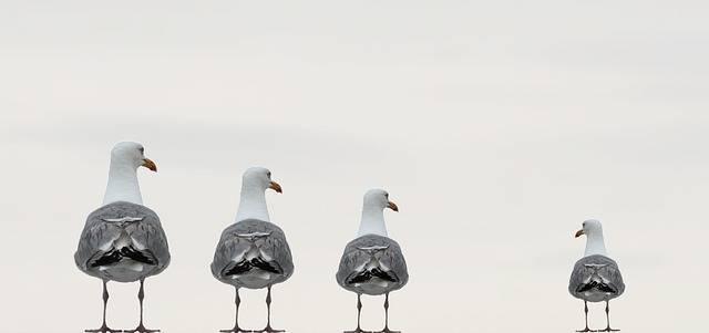 Gulls Fun Photo Composing - Free photo on Pixabay (83011)
