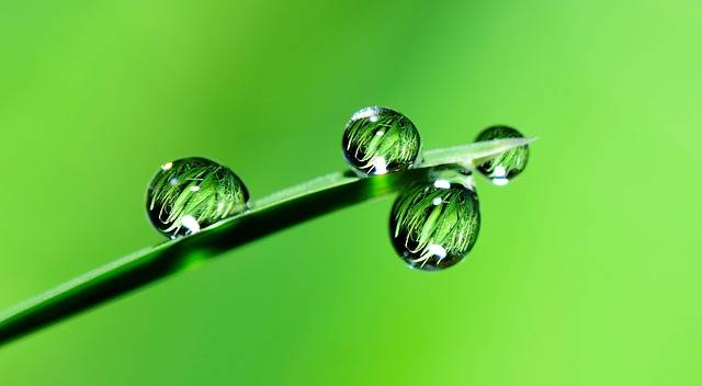 Water Drops Grass - Free photo on Pixabay (89551)