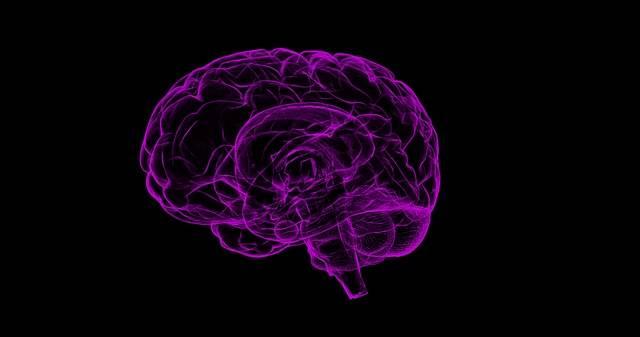 Brain Human Anatomy - Free image on Pixabay (103183)
