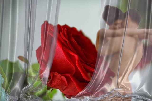 Rose Love Red - Free photo on Pixabay (112009)