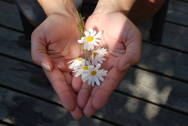 Flower Hands Giving - Free photo on Pixabay (122029)