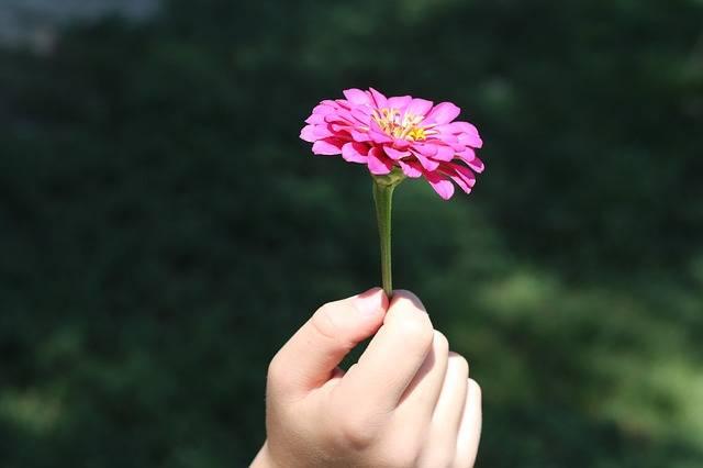Flower Hand Child - Free photo on Pixabay (122057)
