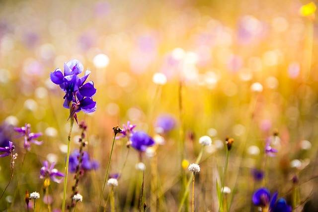 Flowers Wildflowers Orchids - Free photo on Pixabay (128299)