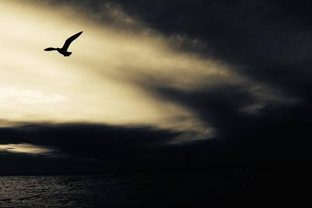 Seagull Nature Animal - Free photo on Pixabay (135309)