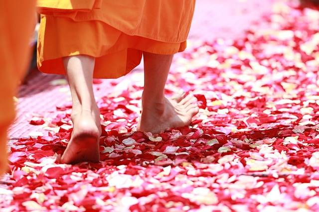 Monk Walking Rose Petals - Free photo on Pixabay (136471)