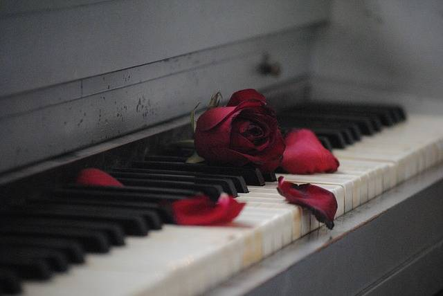 Piano Rose Red - Free photo on Pixabay (139765)