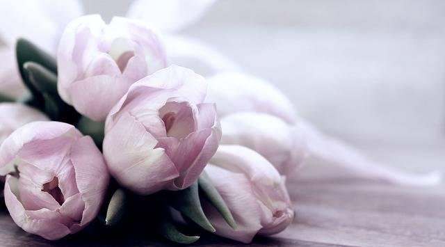 Tulips Tulipa Flowers - Free photo on Pixabay (139786)