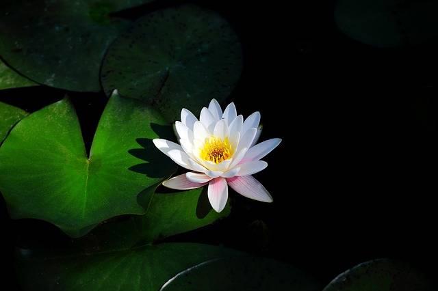 Flowers Plants Leaf - Free photo on Pixabay (142243)