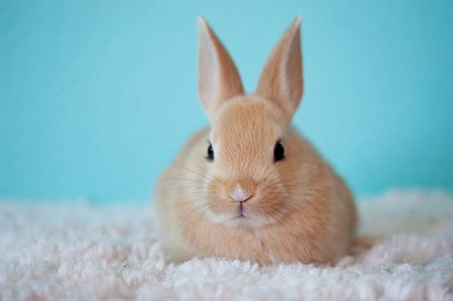 Cute Baby Bunny - Free photo on Pixabay (142257)