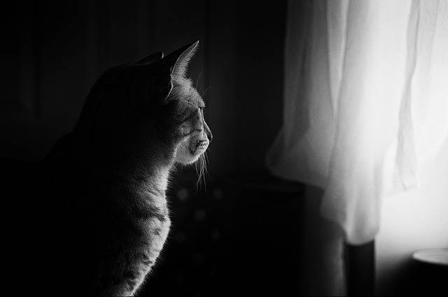 Cat Window Light Feline - Free photo on Pixabay (143837)