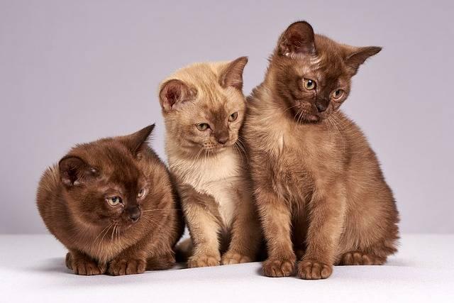 Cute Cats Kittens - Free photo on Pixabay (151598)