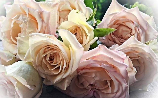 Flowers Roses Bouquet Of - Free photo on Pixabay (154869)