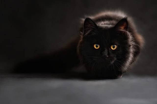 Cat Silhouette Cats - Free photo on Pixabay (160514)
