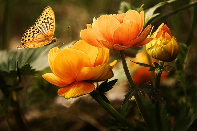 Flowers Background Butterflies - Free photo on Pixabay (161217)