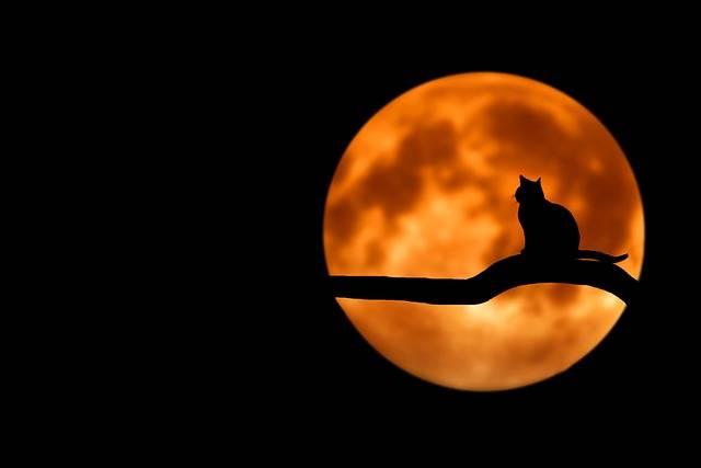 Tree Cat Silhouette - Free photo on Pixabay (170564)