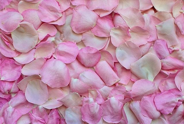 Rose Petals Pink Background - Free photo on Pixabay (176434)