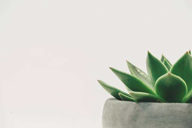 Plant Succulent Potted White - Free photo on Pixabay (178505)