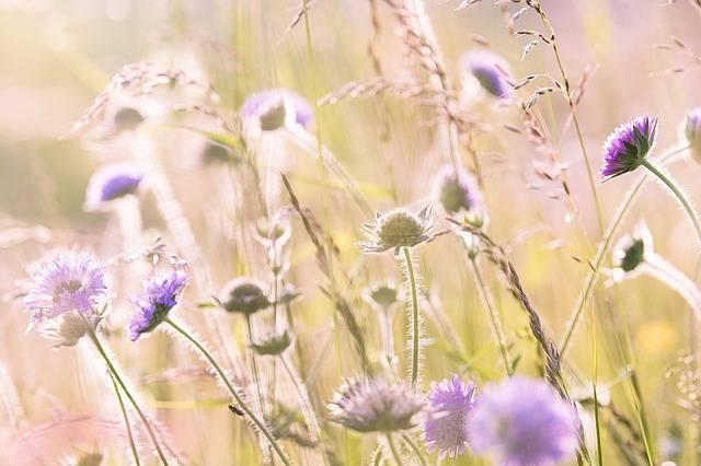 Wildflowers Field Flowers Summer - Free photo on Pixabay (184148)