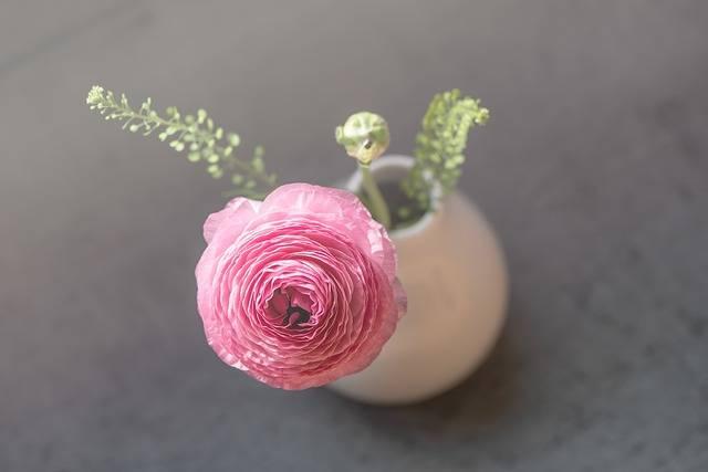 Ranunculus Flower Pink - Free photo on Pixabay (187858)