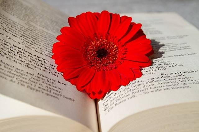 Book Open Read - Free photo on Pixabay (189631)