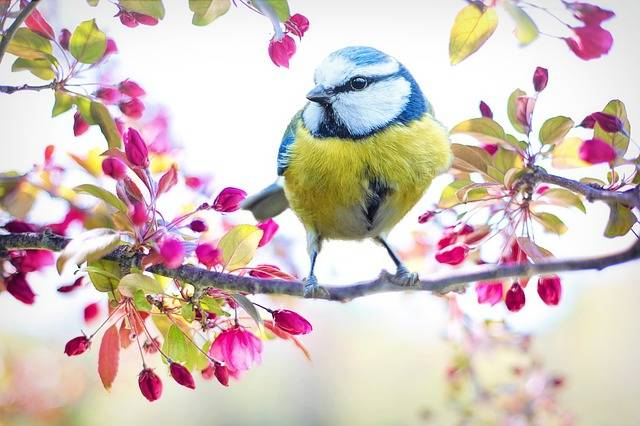 Spring Bird Tit - Free photo on Pixabay (192324)