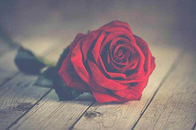 Roses Romantic Valentine In - Free photo on Pixabay (208719)