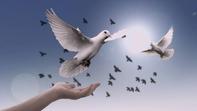 Dove Hand Trust - Free photo on Pixabay (213027)