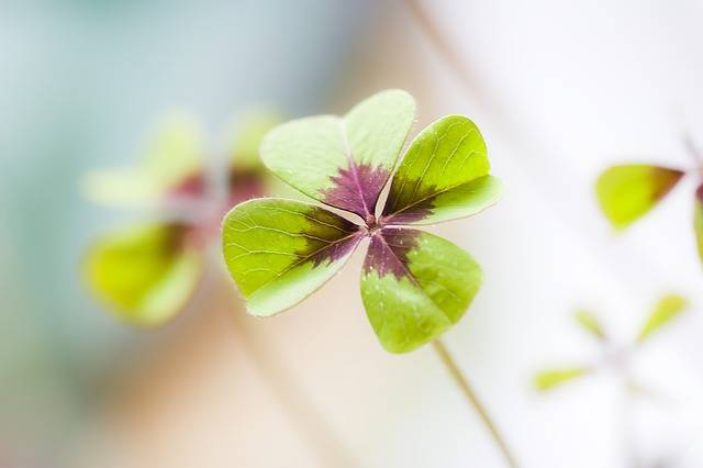 Klee Lucky Clover Luck - Free photo on Pixabay (225637)