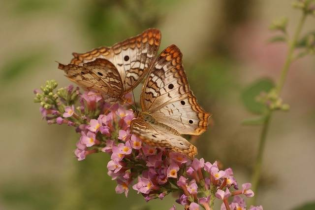 Butterfly Macro Insects - Free photo on Pixabay (231136)