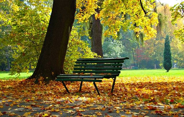 Autumn Park Foliage - Free photo on Pixabay (240274)