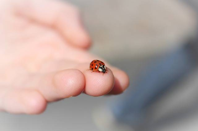 Ladybug Hand - Free photo on Pixabay (242061)