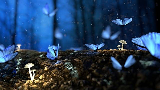 Butterfly Blue Forest - Free photo on Pixabay (252399)