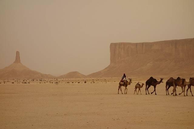 Camel Train Saudi Arabia Ramadan - Free photo on Pixabay (254004)