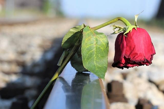 Stop Youth Suicide Sad Red Rose In - Free photo on Pixabay (257662)