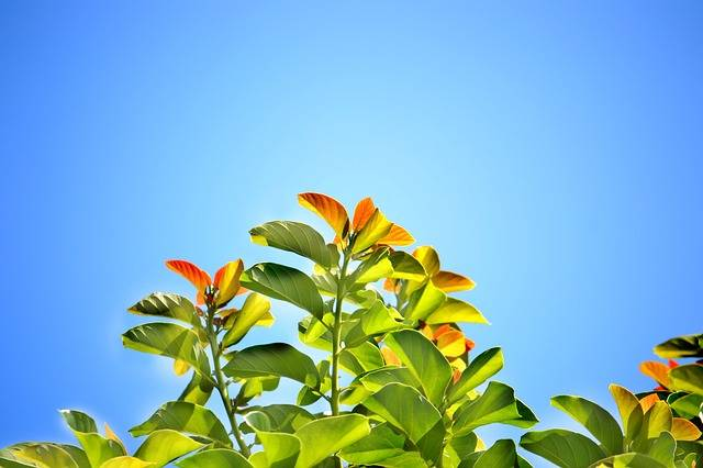 Leaves Blue Sky Summer Bright - Free photo on Pixabay (259492)