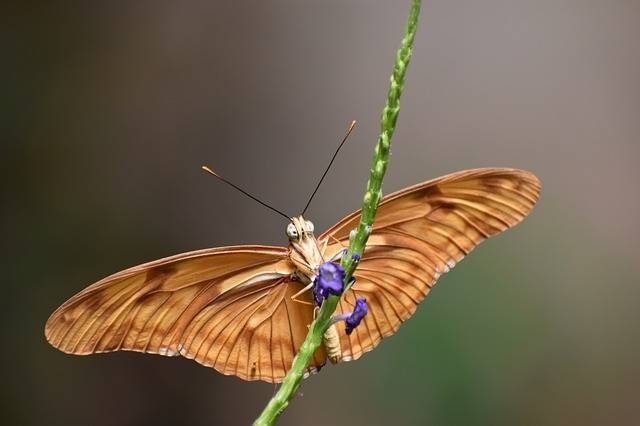 Butterfly Nature Insects - Free photo on Pixabay (260002)