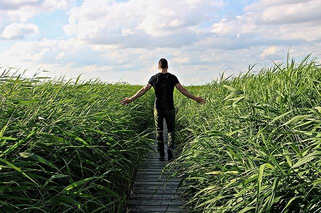 High Grass Walk Relax - Free photo on Pixabay (273656)