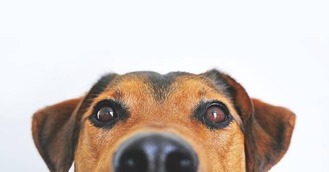 Dog View Sweet Animal - Free photo on Pixabay (277317)