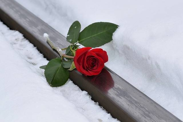 Red Rose Lost Love Snow - Free photo on Pixabay (292849)